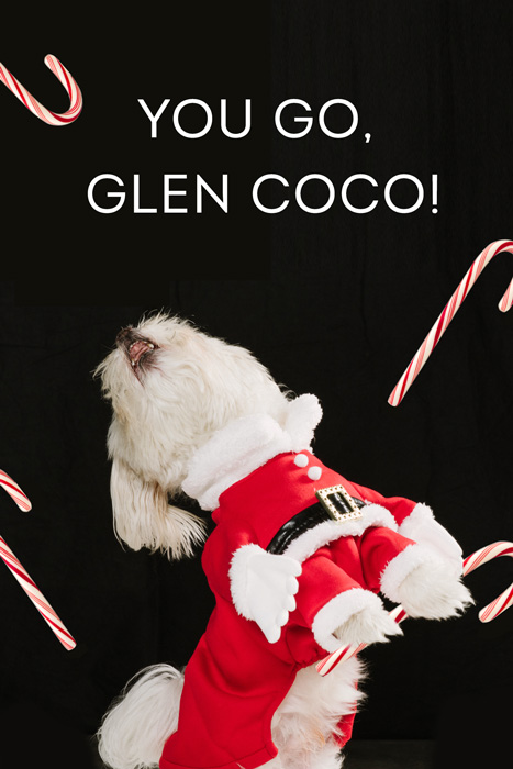 mean-girls-dogs-glen-coco