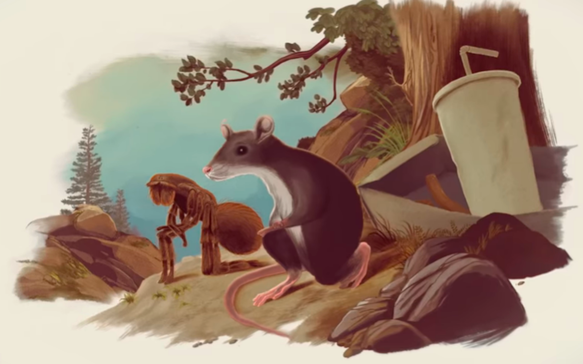 An animated rat and an ant take a knee next to a takeout soda cup.