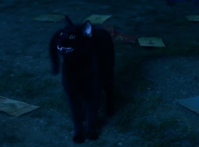 salem thee cat